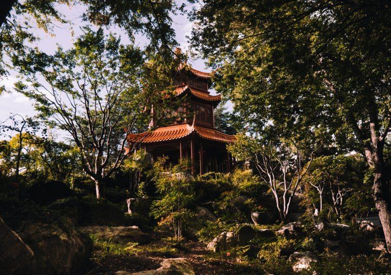 Wat we kunnen leren van Traditionele Chinese Geneeskunde